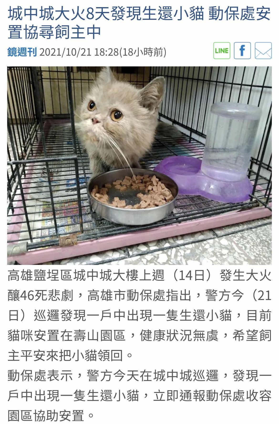 [正妹] 城中城救出貓咪的社工